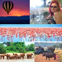 It's been on everyone's list so far and it's on Stacey's too! So many amazing things to do and see regardless of your interests. Just go! Group Travel, Travel Agency, Amazing Things, Holiday Travel, Perth, Just Go, Safari, Things To Do, Africa