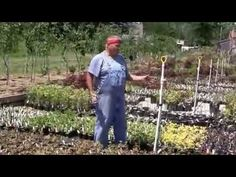 How to water small pots and other plants in the yard, garden or nursery. -Posted June 8, 2014 by Mike