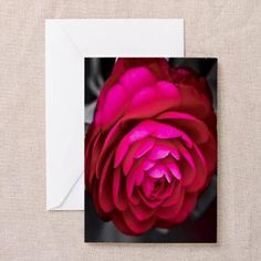Rosy Camellia Greeting Cards (10 Cards/envelopes)  by Lee Hiller #Photography #Flowers