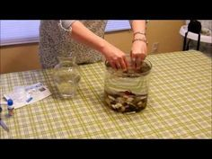 Unboxing of Marimo Moss Ball. Rinsed and added to Betta tank. Betta Tank, Fish Tank, Marimo Moss Ball, Green Algae, Moss Garden, Terrariums, Aquariums, Air Plants, Cacti