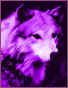 Purple Wolf
