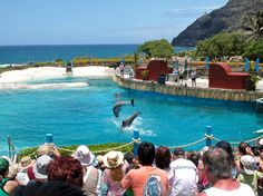 Sea Life Park. One of things I dearly miss in Hawaii.