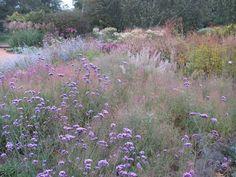 Pensthorpe Millennium Garden 09/10 - 06 by Pensthorpe Photos, via Flickr