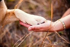 Close connection, paw to hand, man's best friend; this simple photo tells a sweet story.