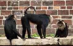 Monkeys in the Leipzig zoo.