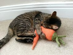 Ravelry: knittingpidge's Catnip Carrot-fee pattern