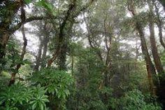 Yo quise ir a la reserva de bosque nuboso a ver la naturaleza en Costa Rica.