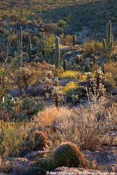 Stock photos of Saguaro National Park East, Rincon Mountain District, Tucson, Arizona. Photos by Ron Niebrugge. Desert Life, Desert Sunset, Marrakesh, Casablanca, Desert Pictures, Into The West, Tucson Arizona, Arizona Usa, Us National Parks