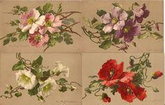Catherine Klein, Vintage Cards, Vintage Postcards, Popular Flowers, Deer Art, Flower Garlands, Floral Illustrations, Vintage Pictures, Floral Motif
