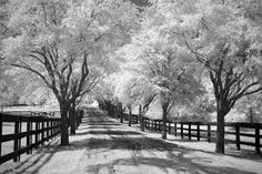 Image result for group of trees  for black and white print