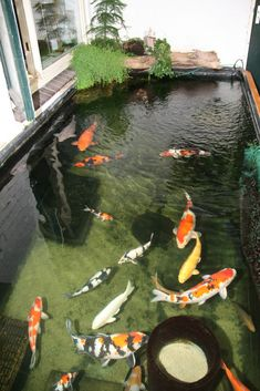 Patio Pond, Ponds Backyard, Backyard Landscaping, Koi Fish Pond, Fish Ponds, Koi Pond Design, Garden Design, Beautiful Fish, Beautiful Pictures