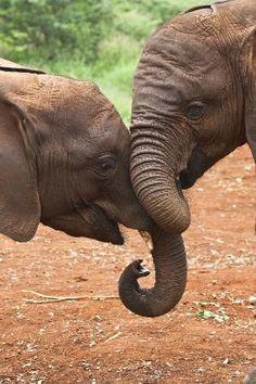 Photos of David Sheldrick Wildlife Trust, Nairobi