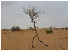 Running tree!