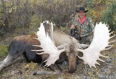 Our hunts in the Yukon, with black bears, the Aleutian Islands and migratory bird hunt Alaska Hunting, Moose Hunting, Rogue River, Migratory Birds, Black Bear, Camping Hacks, Rogues, Deer, Lion Sculpture
