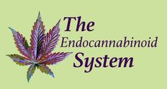 The endocannabinoid system brings balance to most vital physiological functions, including sleep, appetite, pain, inflammation, memory, mood and reproduction...
