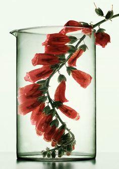 Medicinal Plants - Peter Lippmann