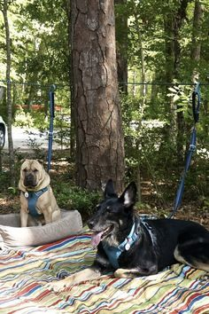 Zelt Camping, Camping Bedarf, Camping Snacks, Winter Camping, Camping Checklist, Camping Essentials, Family Camping, Outdoor Camping, Camping Ideas