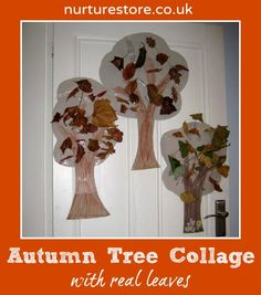Autumn tree collage with real leaves