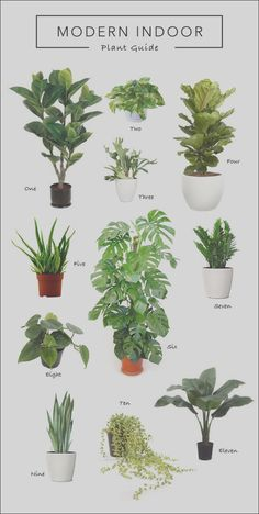 Nature Living, Living Room Plants, Decor Home Living Room, Bedroom Plants, Living Rooms, Easy House Plants, Floating Plants, Cheap Beach Decor, Cheese Plant