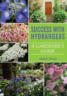 Success With Hydrangeas By Lorraine Ballato   National Garden Bureau  Hydrangea Not Blooming, Garden Products