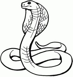 7 Best reptiles images | Snake coloring pages, Animal coloring ...