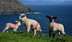 10 Fantastic Reasons To Visit Ireland - It's no secret that Ireland is home to incredibly beautiful landscape, pristine islands, lush countryside and some architectural marvels in form of ancient Castles. The country has something to offer to every one, from fast-paced city life to untouched countryside.Here are our 10 fantastic re...