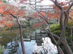 Foliage at Happo-en  Happo-en, Garden of 8 Views. Tokyo, Japan, 15th December 2014.