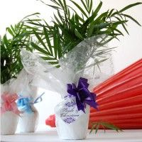 Buy Plants Online, Send Flowers On Birthday, Anniversary, Wedding Unique Corporate Gifts India, Soft Toys Online Shopping, New Year Gifts to India, Valentine's Day Gifts by India Florist, India Shopping Send Gifts To India, Send Flowers To India, Buy Plants Online, Gift A Plant Online, Send flowers on birthday, anniversary, weddings