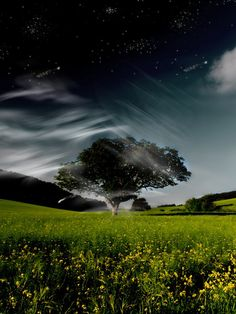 Cool skyline behind a tree and grass field