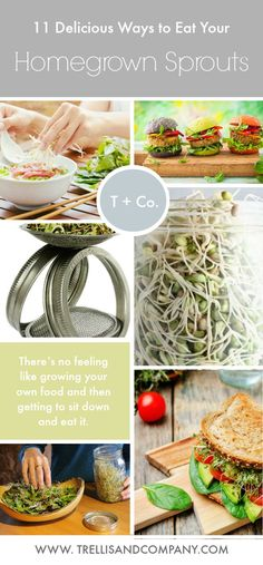 Not only are they healthy, but sprouts are also incredibly versatile. Here are 11 ways to incorporate sprouts into your cooking. Raw Food Recipes, Vegetable Recipes, Vegetarian Recipes, Cooking Recipes, Healthy Recipes, Healthy Snacks, Healthy Eating, Growing Greens, Sprout Recipes