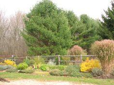 Aromatic Garden in Fall