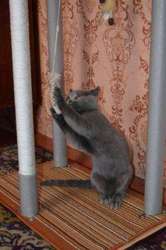 Gato de casa con sus propias manos