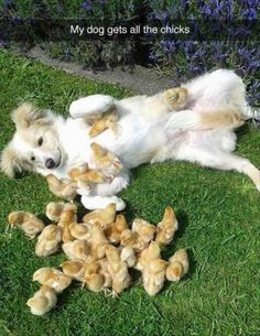 My dog gets all the chicks.