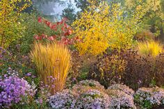 birch & rhus typhina with two different asters, tall verbena, brown-eyed susan seedheads and an upright grass