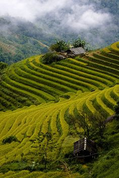 Sapa Hanoi, Vietnam ... loved it last time I was there. Would love to see it again with some more time on my hands!