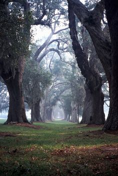 """Breathtaking beauty. I have always loved the long winding path between large & lush, yet foggy & slightly spooky majestic trees...reminds me of the old Antebellum homes of the South, which are so lovely and romantic."" said one pinner"