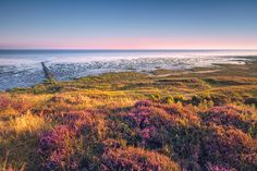 Am Morsumer Kliff (Sylt), Dämmerung, Ebbe, Gezeiten, Küste, Morsum, Nordsee, Sonnenaufgang, Watt