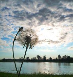 Dandelion clouds over lake Dandelion Clock, Dandelion Wish, Dandelion Flower, Dandelion Seeds, Photography Backdrops, Art Photography, Taraxacum Officinale, 4 Wallpaper, Dandelion Designs