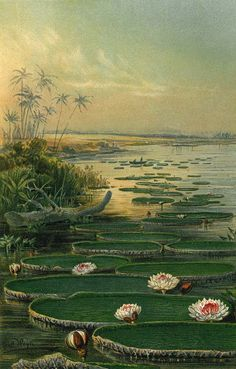 Victoria Regia Water Lilies Lotus Flowers 1892 by carambas, $20.00