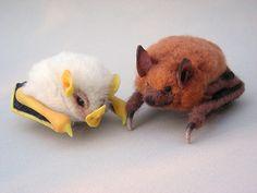 Honduran white bat & Eastern pipistrelle by CreturFetur, via Flickr