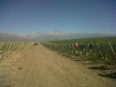 Altos Las Hormigas's Malbec harvest at Vista Flores, at the foothills of the Andes Mendoza, Harvest, Vineyard, Country Roads, Outdoor, Argentina, Flowers, Outdoors, Outdoor Games