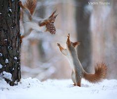 http://ift.tt/1K6283m #animals I give you  the pinecone. by vadimtrunov http://ift.tt/1SY24FU #pierceandbiersadorf