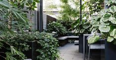 Clever use of space and a green-on-green palette has transformed this inner-city terrace into a private oasis courtesy of Lisa Ellis Gardens. garden How to create an inner-city terrace garden Small Backyard Gardens, Rooftop Garden, Backyard Patio, Backyard Landscaping, Outdoor Gardens, Rooftop Deck, Courtyard Gardens, Small Garden Terrace Ideas, Roof Gardens