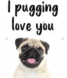 Pugs, Join, Love You, Friends, Amigos, Te Amo, Je T'aime, Pug Dogs, I Love You