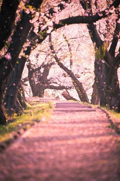 I think Heaven will look like this! Obviously it's a perfect color: Pink! Pink Love, Pretty In Pink, Pink Trees, I Believe In Pink, Everything Pink, Belleza Natural, What A Wonderful World, My Favorite Color, Pretty Pictures