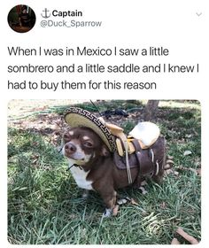 When I Was In Mexico I Saw A Little Sombrero And A Little Saddle And I Knew I Had To Buy Them For This Reason - Funny Memes. The Funniest Memes worldwide for Birthdays, School, Cats, and Dank Memes - Meme Cute Animal Memes, Animal Jokes, Cute Funny Animals, Funny Animal Pictures, Cute Baby Animals, Funny Cute, Funny Dogs, Hilarious, Funniest Pictures