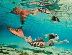 Fantasy Creatures, Mythical Creatures, Sea Creatures, Mermaid Cove, Mermaid Art, Mermaid Paintings, Tattoo Mermaid, Vintage Mermaid, Real Mermaids