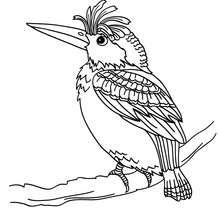 Enjoy This Bird Nest Coloring Page Nice Sheet More