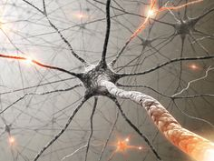 Открыты нейроны, помогающие предугадать будущее