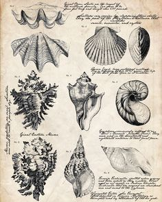 seashell-journal-writing-16x20.jpg (2400×3006)